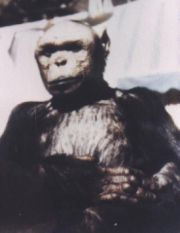 2011 Show Humanzee