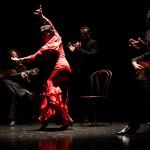 Noche Flamenca New Brunswick