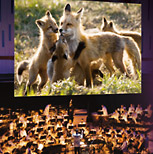 Omaha Symphony Holland Performing Arts Center Ne Tickets