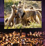 Omaha Symphony Holland Performing Arts Center Ne Tickets