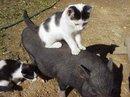 2011 Prairie Cats