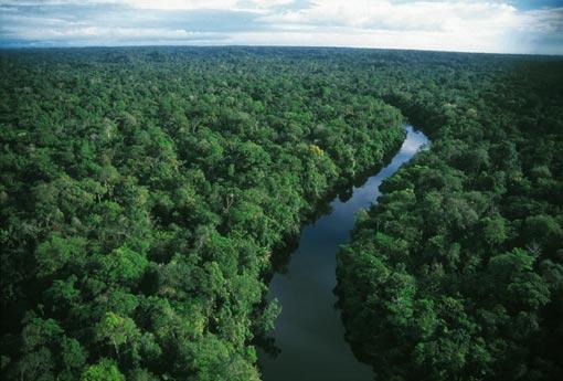Rainforest Benefit Tickets