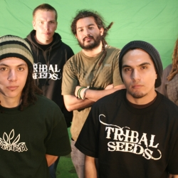 Dates 2011 Tribal Seeds