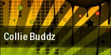 Collie Buddz Seattle tickets