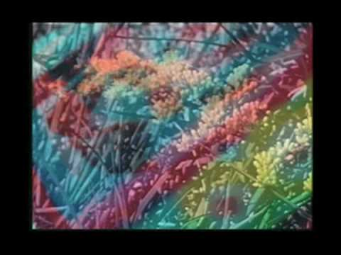 Animal Collective - Daily Routine (Hills can Sea)