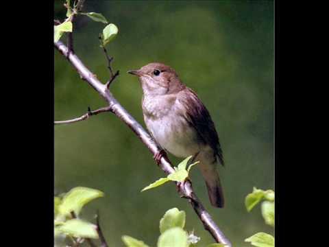 """Respighi - Gli Uccelli (""""The Birds"""") - (2/2)"""