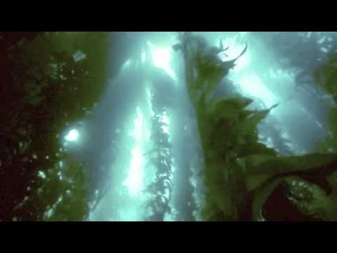 Brian Buch, Shadows from an Underwater Forest, Estonian National Symphony Orchestra