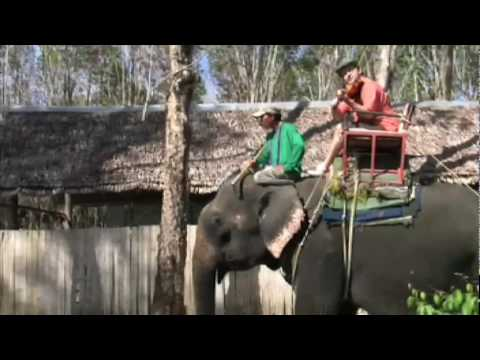 Igudesman rides Sherlock Holmes on an Elephant