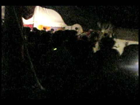 10KLF 2009 - JWP plays an after hours set for a massive crowd in Sallie Campground