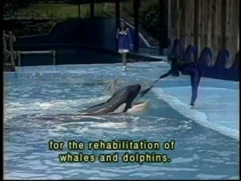 "Keiko Airlift ""The Original Free Willy Whale"" on Planet 1: ""Let`s Make Every Day Earthday!"" Special"