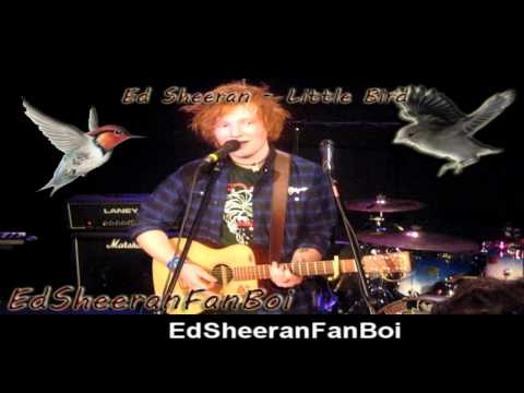 Ed Sheeran - Little Bird