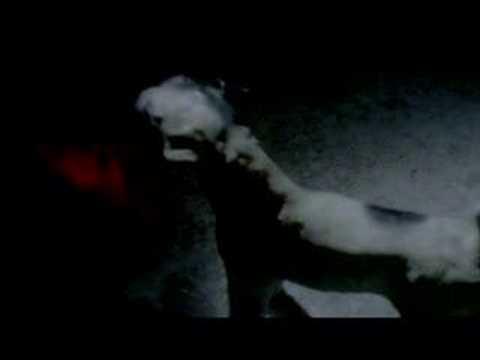"Mogwai - ""Friend of the Night"""