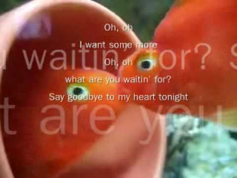 Neon Trees - Animal - W / LYRICS