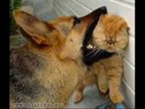 Paquita la del Barrio El hombre y el gato