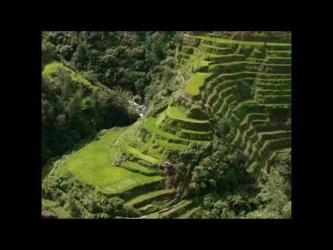 Vamos a plantar arroz