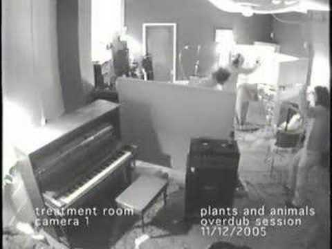 Plants and Animals recording at the Treatment Room, Montreal