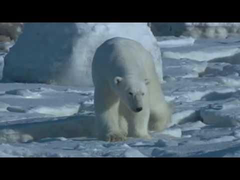 PUSCIFER Polar Bear (w/lyrics)