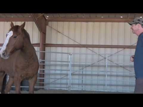 Wild Horse Empowerment - Rick Allen and Lauren Monroe