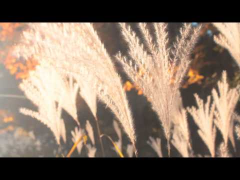 Somewhere in Massachusetts by Rogue Valley - Official Video