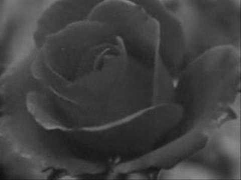 Rose Kemp