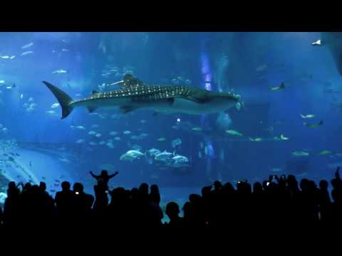 Lara`s Song by Glide & Swerve (Okinawa Churaumi Aquarium) :-)