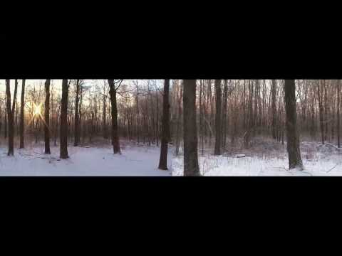 Forest After Ice Storm - Split Screen