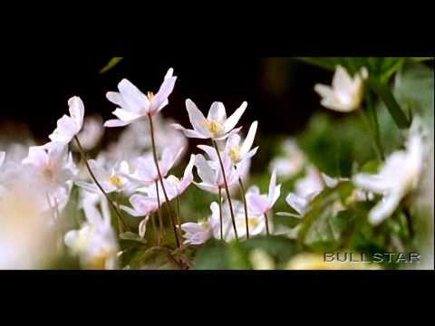 Tim Janis: A Thought Of Spring - Egy gondolatnyi a tavaszb�l [HD-BS 1080]