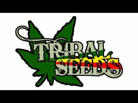 Tribal Seeds Tribal Seeds Away