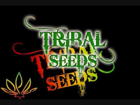 Tribal Seeds - Vampire