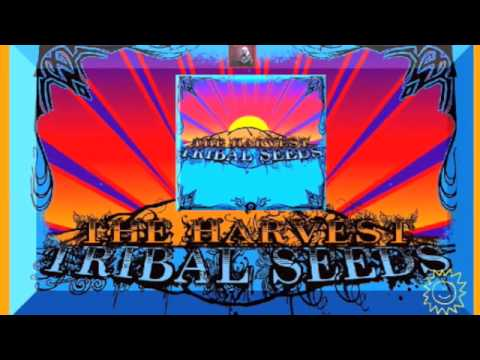 All I Know - Tribal Seeds