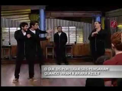 Quinta Categoria Frases-Oq os portuqueses falaram quando viram a arara azul?