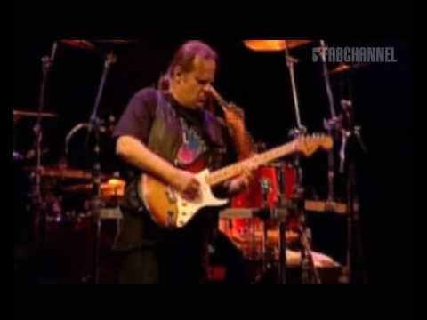 Walter Trout Band (Live at Paradiso): Life in the Jungle